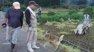 石ばし庵稲作の会