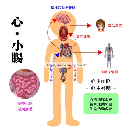 臓象 心・小腸