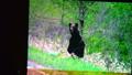 安藤誠の世界展2010.in.風ある林整骨院