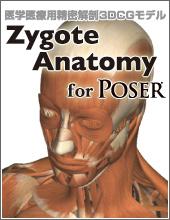 poser Zygote Anatomy