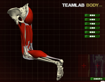 TEAM LAB 3D View